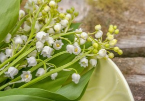 lily-of-the-valley-5083800 1920